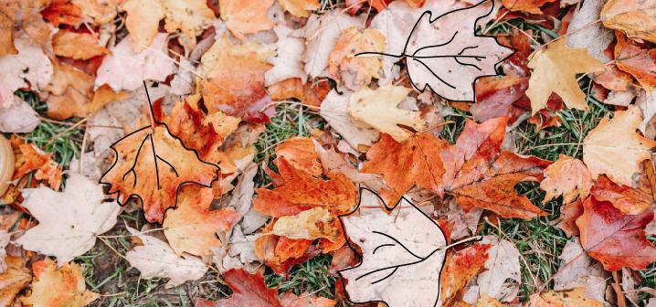 image of fallen leaves